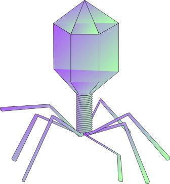 bacteriophage-309497_640